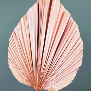 Preserved Pink Anahaw Leaf